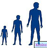 Growth in height
